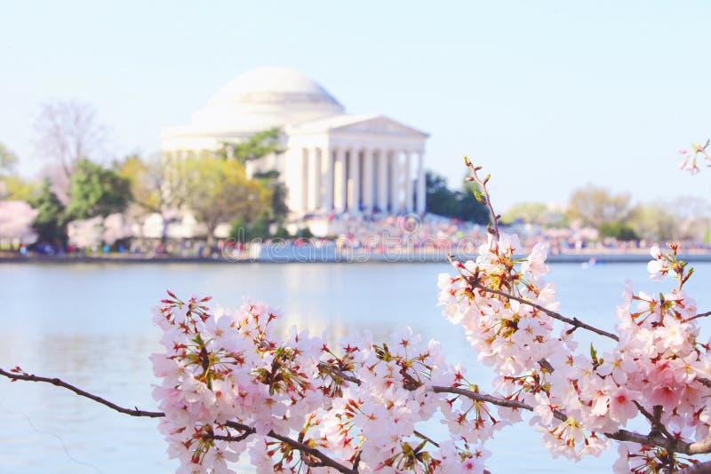 进展樱桃dc华盛顿 免版税库存图片