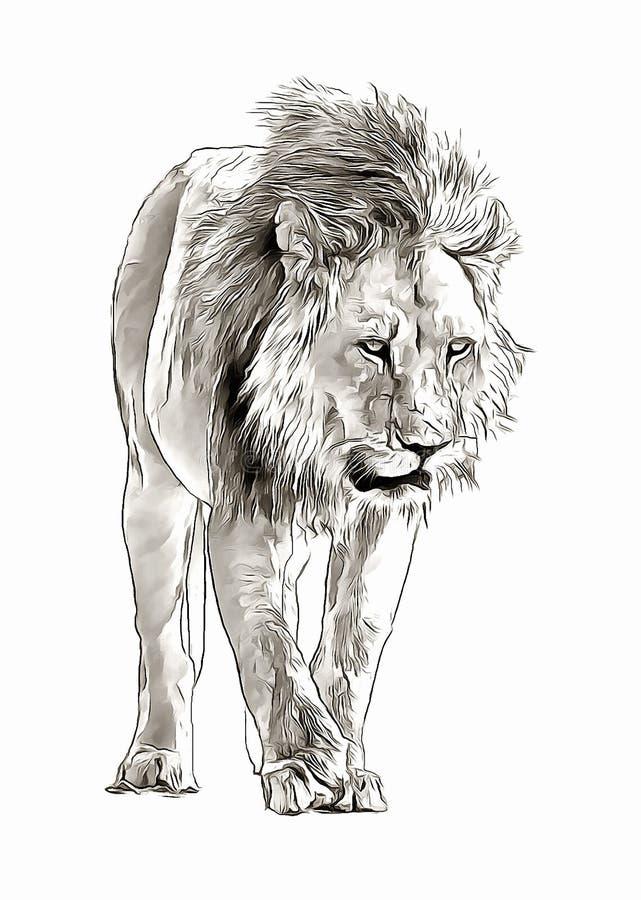 进来在大草原数字式剪影的Arican狮子 免版税库存图片