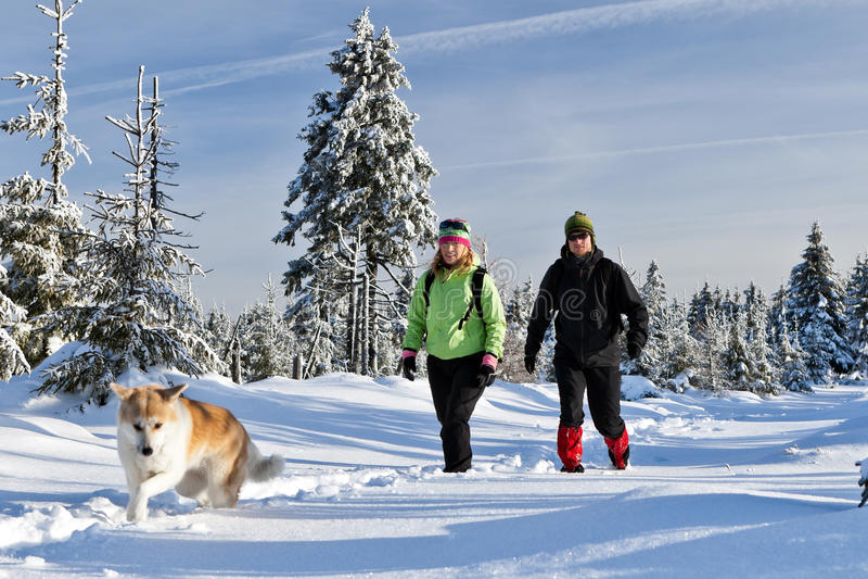 远足与在冬天山的狗的夫妇 免版税库存照片