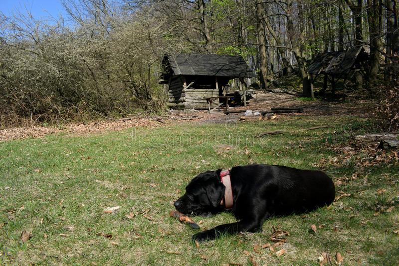 远足与我们的狗 免版税库存图片
