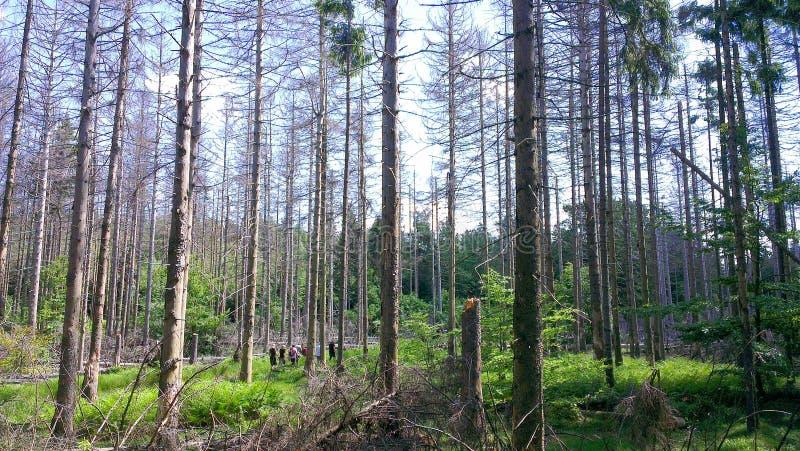 远足在一个德国夏天在森林里 免版税库存图片