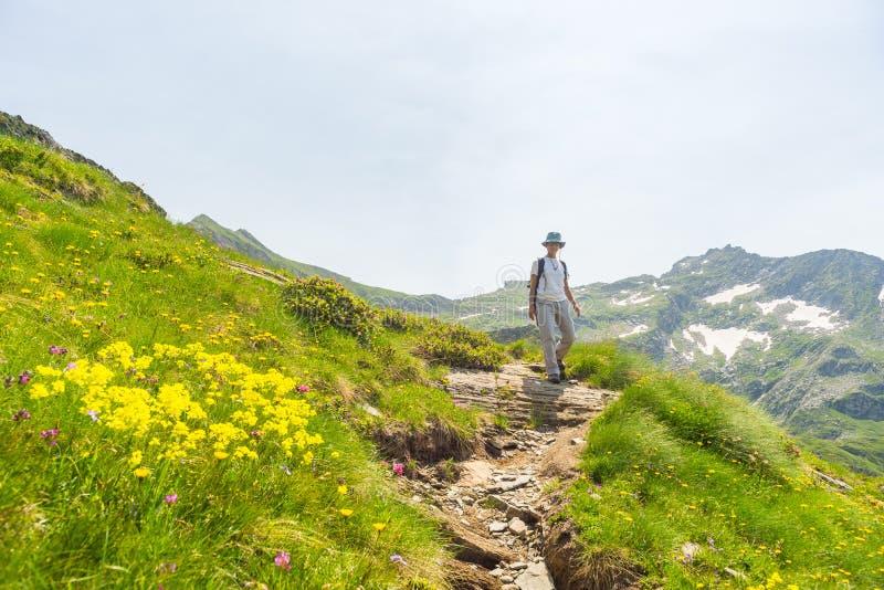 远足在全景小径的阿尔卑斯 免版税库存图片