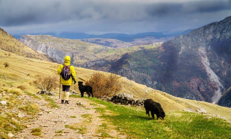 远足在波斯尼亚的山 免版税图库摄影