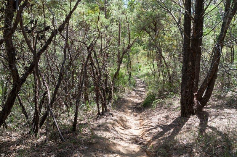 远足在灌木的丛林的小径 库存图片