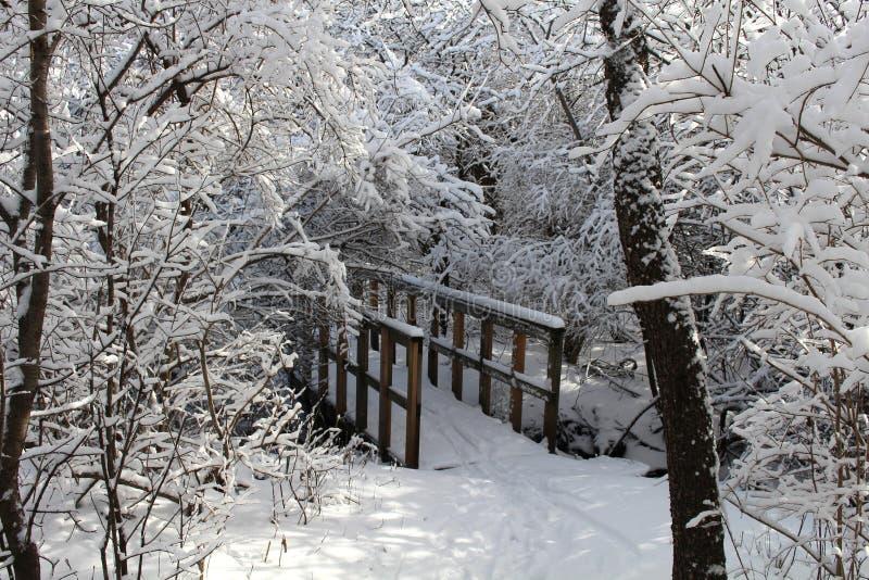 远足桥梁新的降雪的森林 库存照片