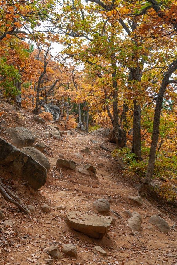 远足用秋季叶子盖的道路通过山的山毛榉森林 免版税库存图片
