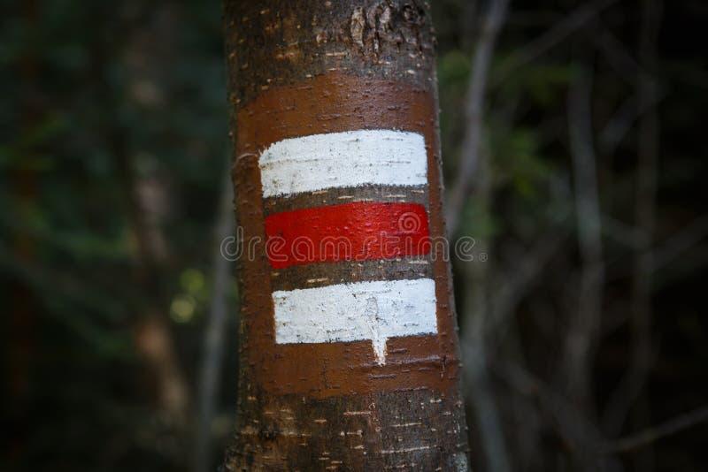 远足的五颜六色的标志在树的吠声 免版税库存图片