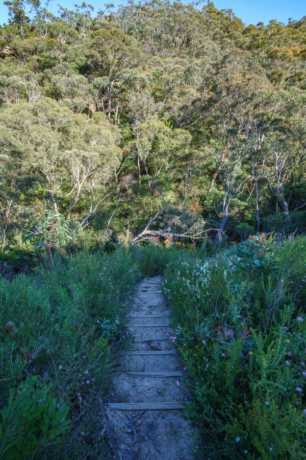远足盛大clifftop步行,蓝色山,澳大利亚3 免版税库存照片