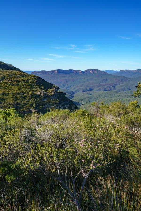远足盛大clifftop步行,蓝色山,澳大利亚10 库存照片