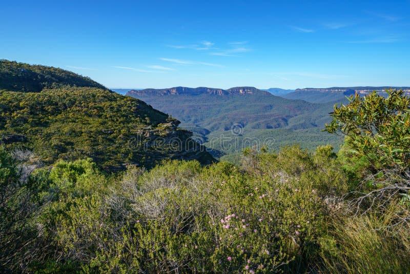 远足盛大clifftop步行,蓝色山,澳大利亚9 库存照片