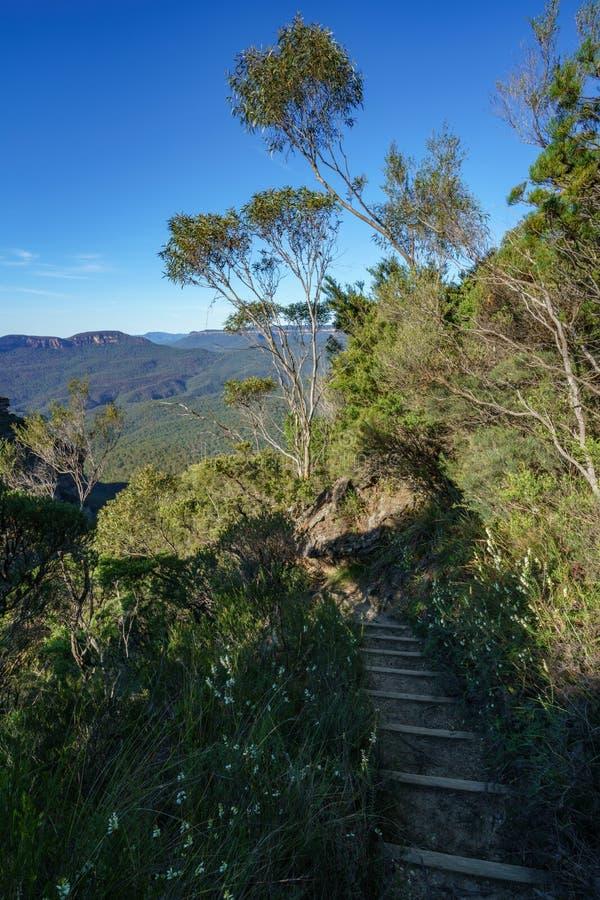 远足盛大clifftop步行,蓝色山,澳大利亚7 免版税库存图片