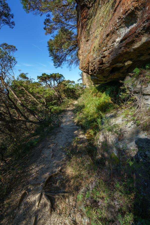 远足盛大clifftop步行,蓝色山,澳大利亚4 库存图片