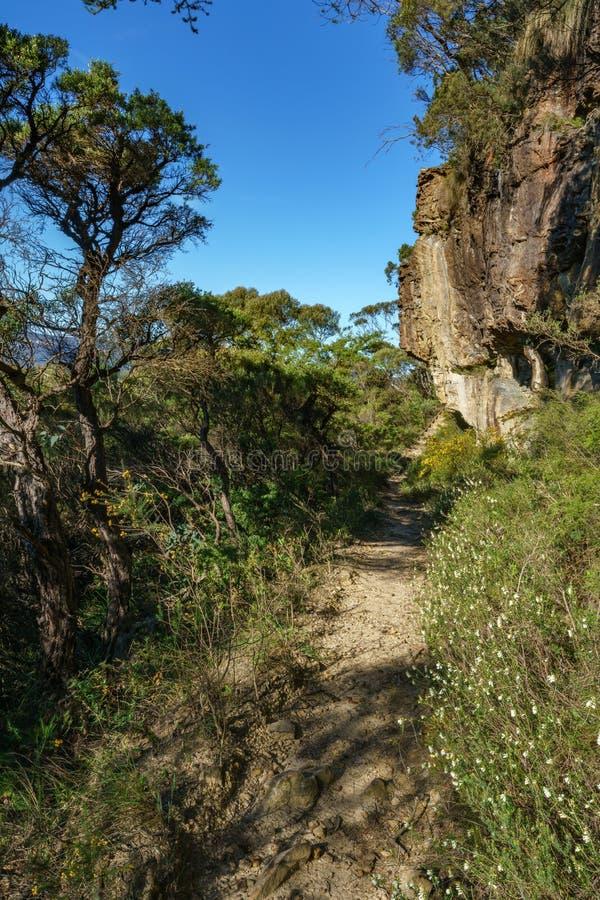 远足盛大clifftop步行,蓝色山,澳大利亚5 免版税库存图片