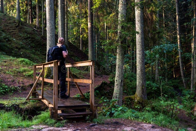 远足者在森林里 库存图片