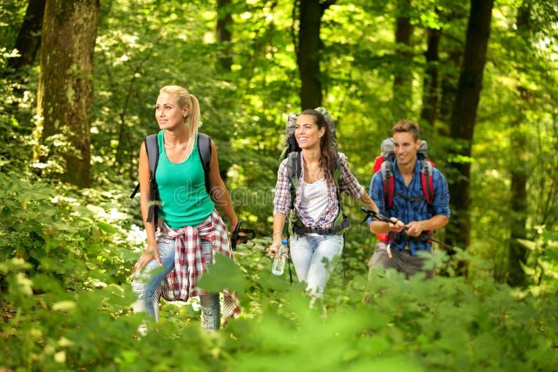年轻远足者在森林里 免版税库存照片