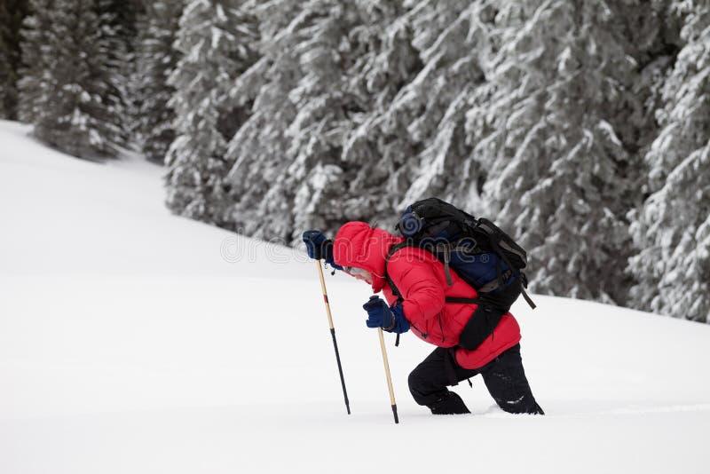 远足者在随风飘飞的雪做他的方式在积雪的森林里在winte 免版税库存照片