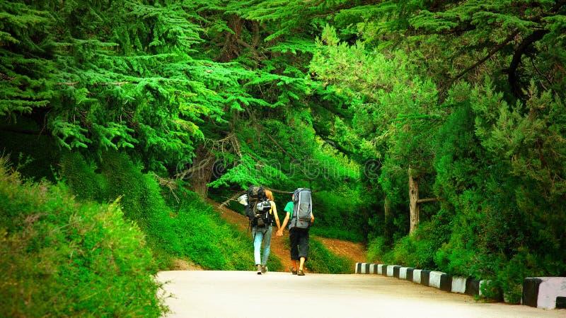 远足者游人夫妇走在美丽的杉木树森林公园的路的 库存照片