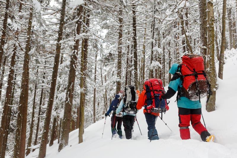 远足者队冬天山的 库存图片