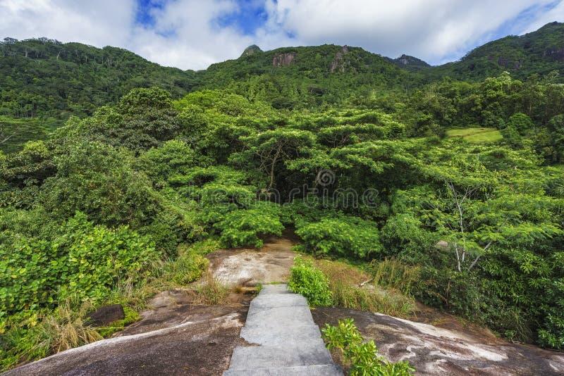 远足花岗岩楼梯在密林, mahé,塞舌尔群岛 免版税库存图片