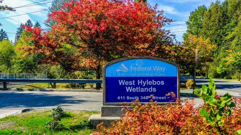 远足西方Hylebos沼泽地在早期的秋天,联邦W停放 库存图片