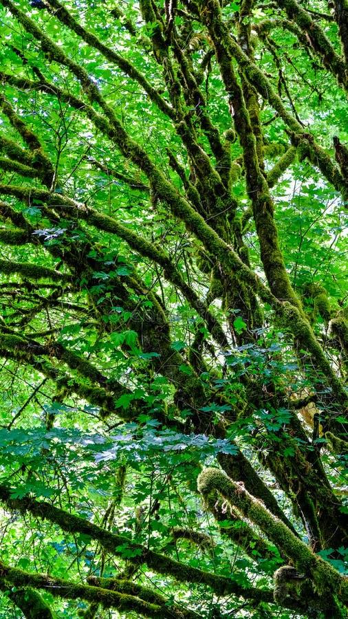 远足走和探索美丽的绿色和自然Tolmie国家公园在明亮的晚春的Nisqually华盛顿在船尾 免版税库存图片