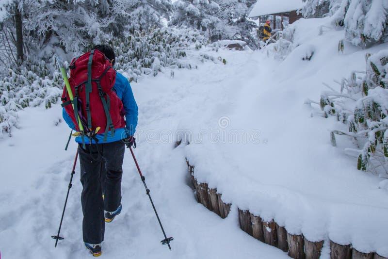 远足走在森林里的小组在下雪期间在冬天 图库摄影