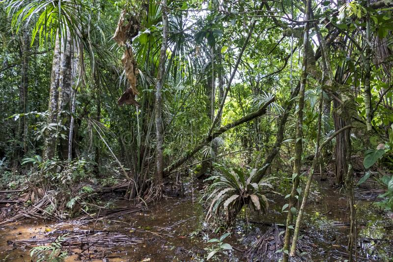 远足道路的雨林充斥了与雨水在马蒂蒂国立公园,玻利维亚 库存图片