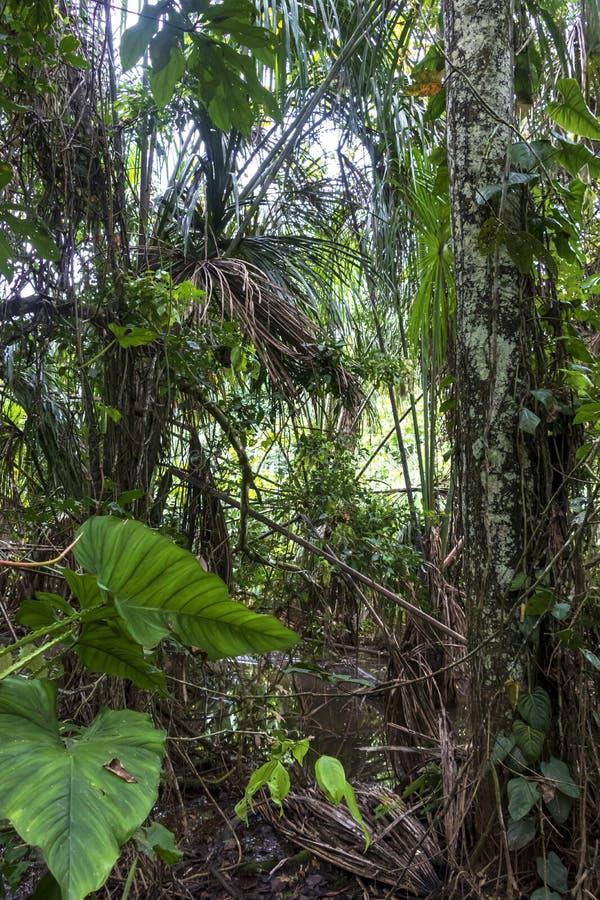 远足道路的雨林充斥了与雨水在马蒂蒂国立公园,玻利维亚 库存照片