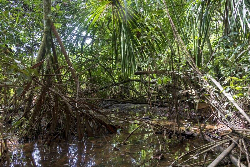 远足道路的雨林充斥了与雨水在马蒂蒂国立公园,玻利维亚 免版税库存照片