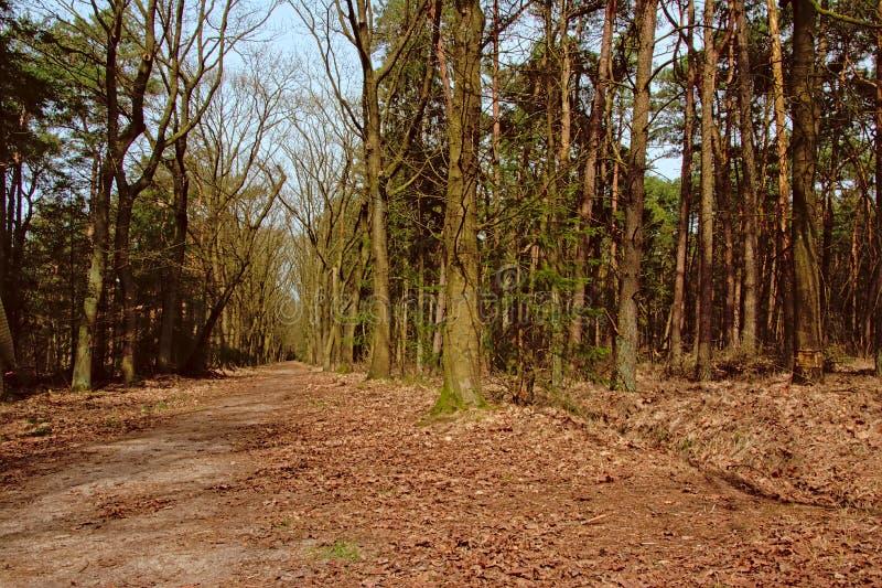 远足道路穿过卡尔姆特豪特荒地的一个森林 免版税库存图片