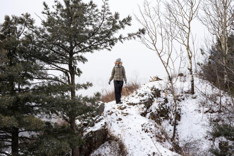 远足:女孩攀登一座山的多雪的上面沿一条道路的在杉木和其他树中 免版税库存照片