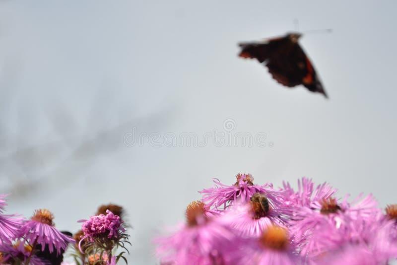 远离花的蝴蝶飞行 免版税库存图片