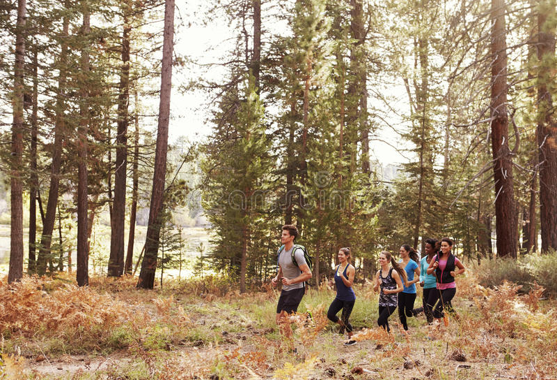 连续跑通过森林的六个年轻成人 图库摄影