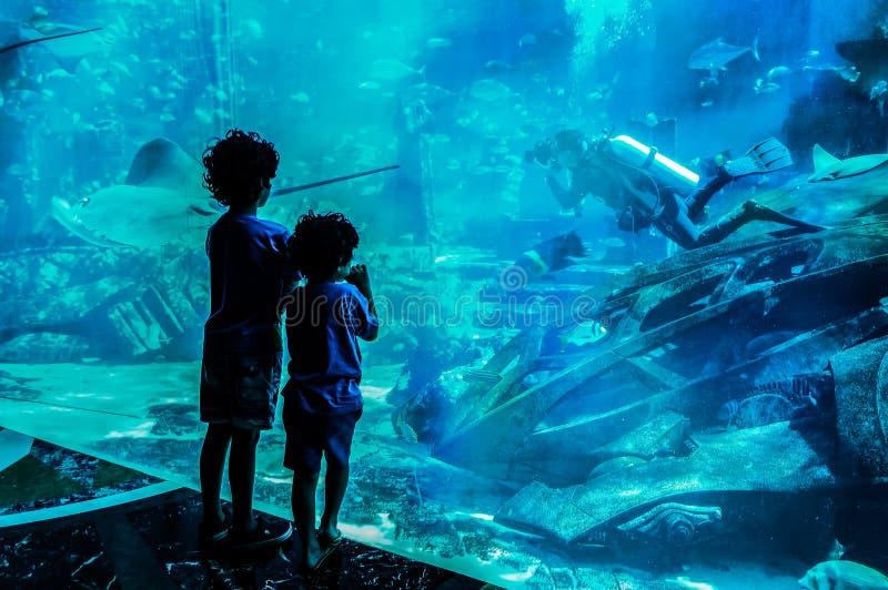 迪拜 夏天2016年 看一个大水族馆的两个男孩在旅馆亚特兰提斯里棕榈 库存照片