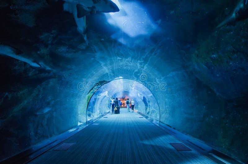 迪拜水族馆的隧道 免版税库存图片