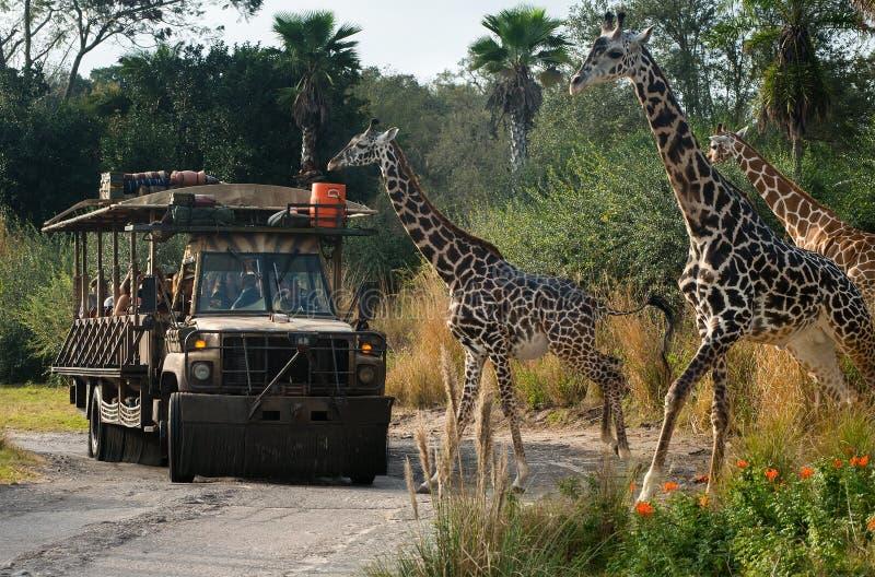 迪斯尼世界乞力马扎罗徒步旅行队动物Kindom 库存图片