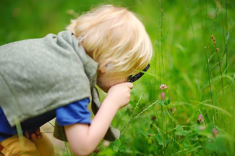 迷人的与放大镜的孩子探索的自然 看与放大器的小男孩树 免版税库存图片