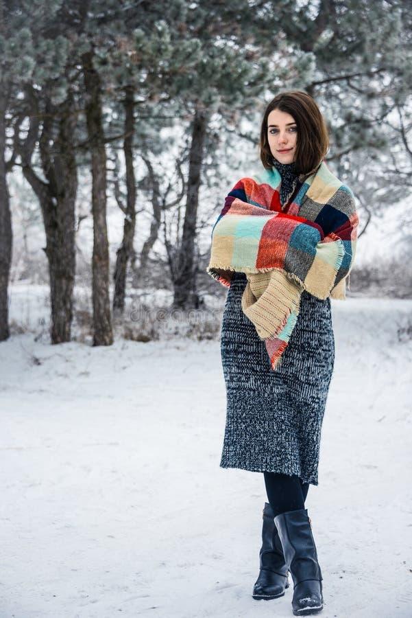 迷人的女孩冬天画象  库存图片