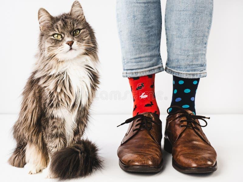 迷人的小猫和人的腿 r 图库摄影