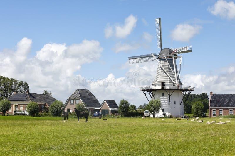 牧场_迷人的荷兰风车和马在牧场地.
