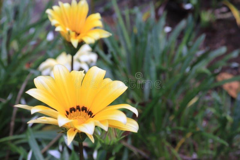 迷人的黄色花有森林背景 库存图片