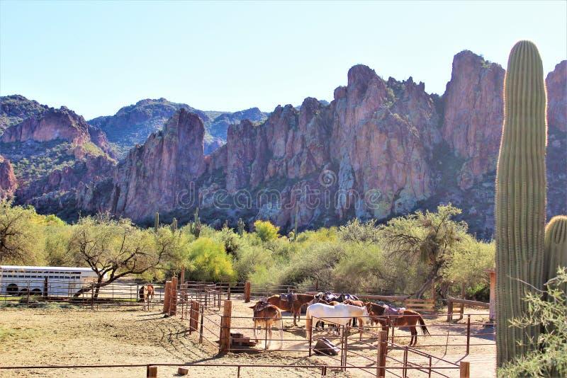 迷信山野荒地地区和马在菲尼斯亚利桑那 图库摄影