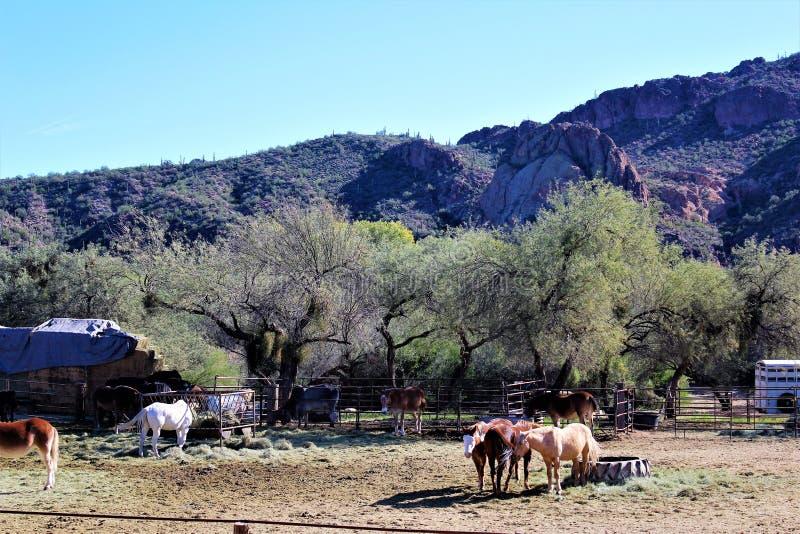 迷信山野荒地地区和马在菲尼斯亚利桑那 库存照片