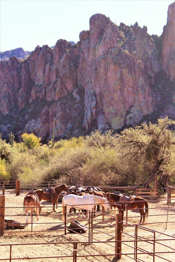 迷信山野荒地地区和马在菲尼斯亚利桑那 免版税图库摄影
