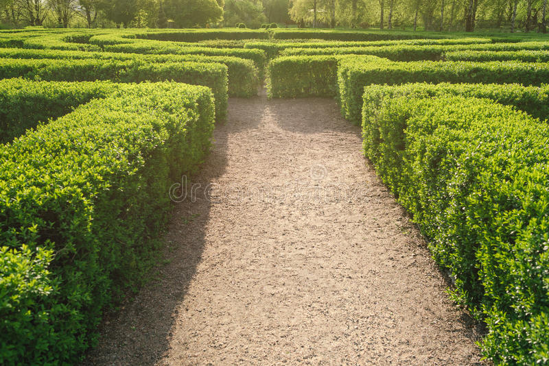 迷宫在一个公园一个晴天在夏天 灌木迷宫与绿色新鲜的叶子的 免版税库存图片