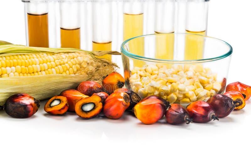 迷宫玉米和油棕榈树获得了在试管的生物燃料 库存图片