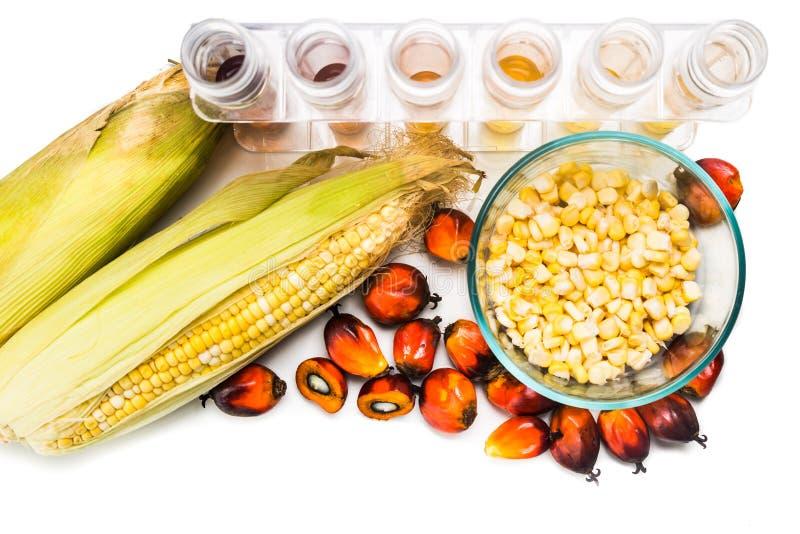 迷宫玉米和油棕榈树获得了在试管的生物燃料 库存照片