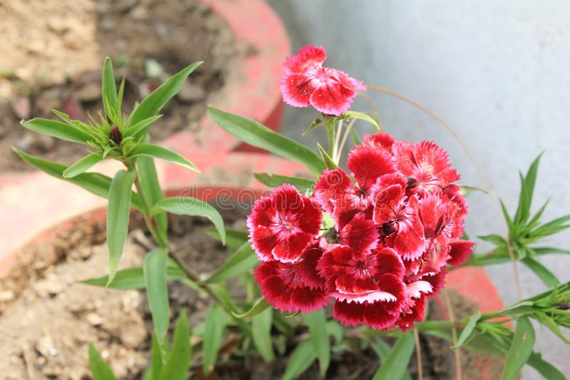 迷惑的五颜六色的花和芽 免版税库存照片