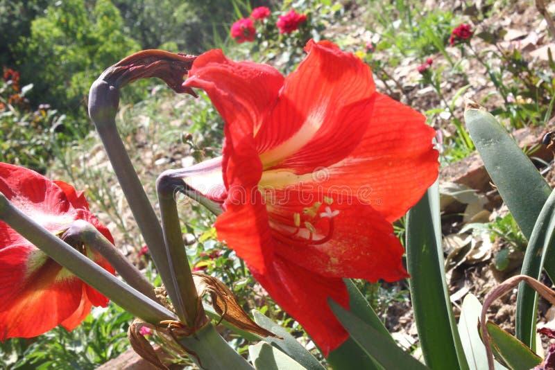 迷惑的五颜六色的花和芽 库存照片