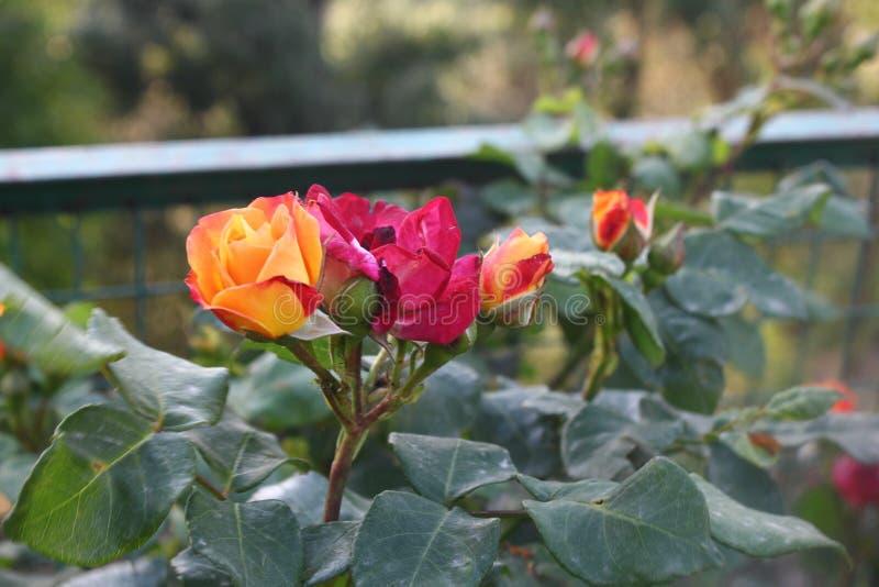 迷惑的五颜六色的花和芽 库存图片